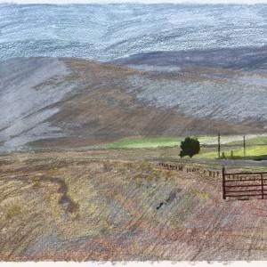 Granular Meadows 01