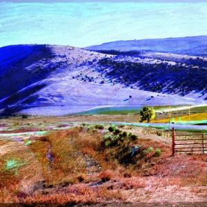 Granular Meadows 02